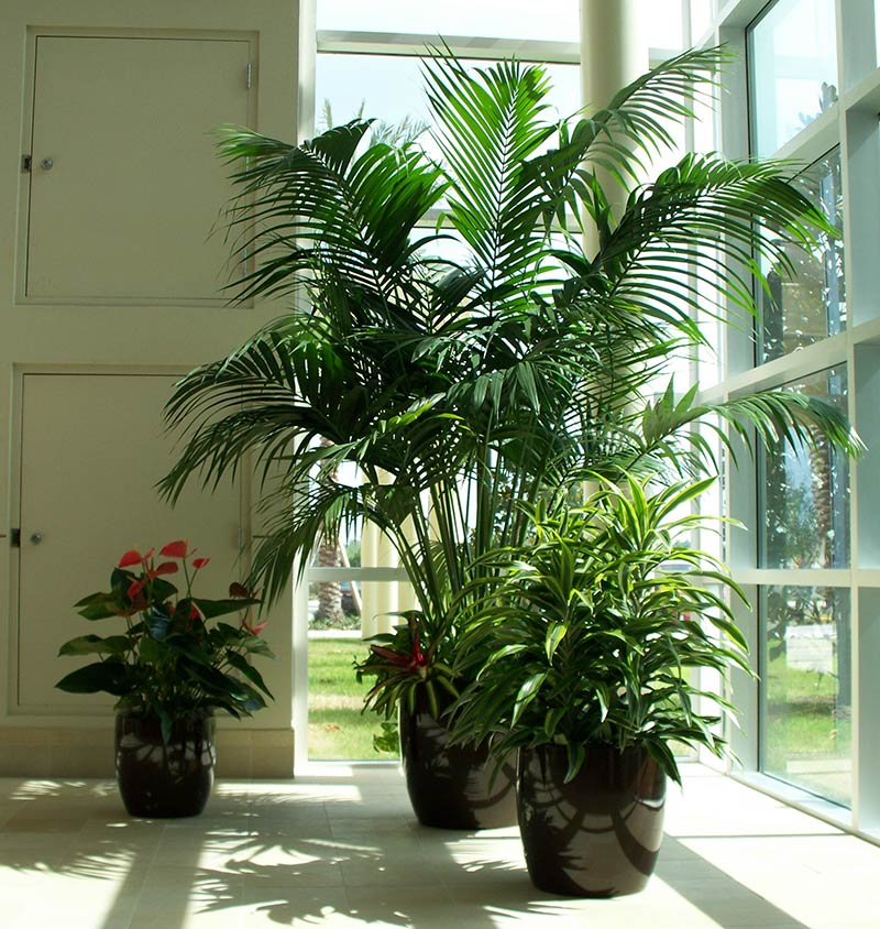 Green Interior Foliage